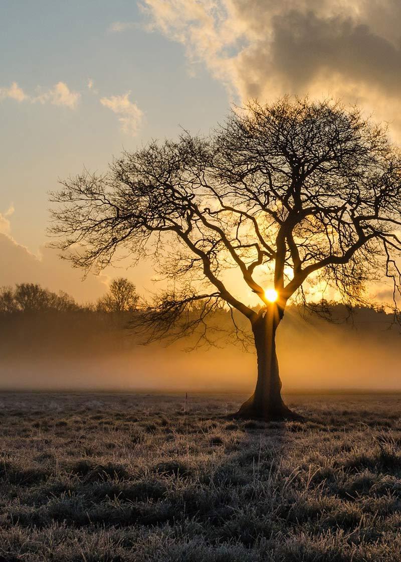 Photographie d'un arbre dans un lever de soleil - Pixabay
