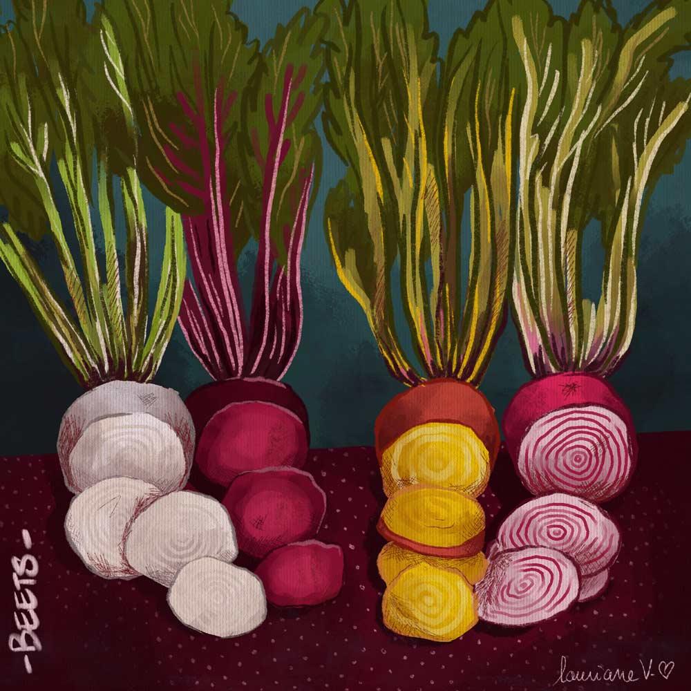 Beets - illustration de Lauriane Vincent non libre de droits.