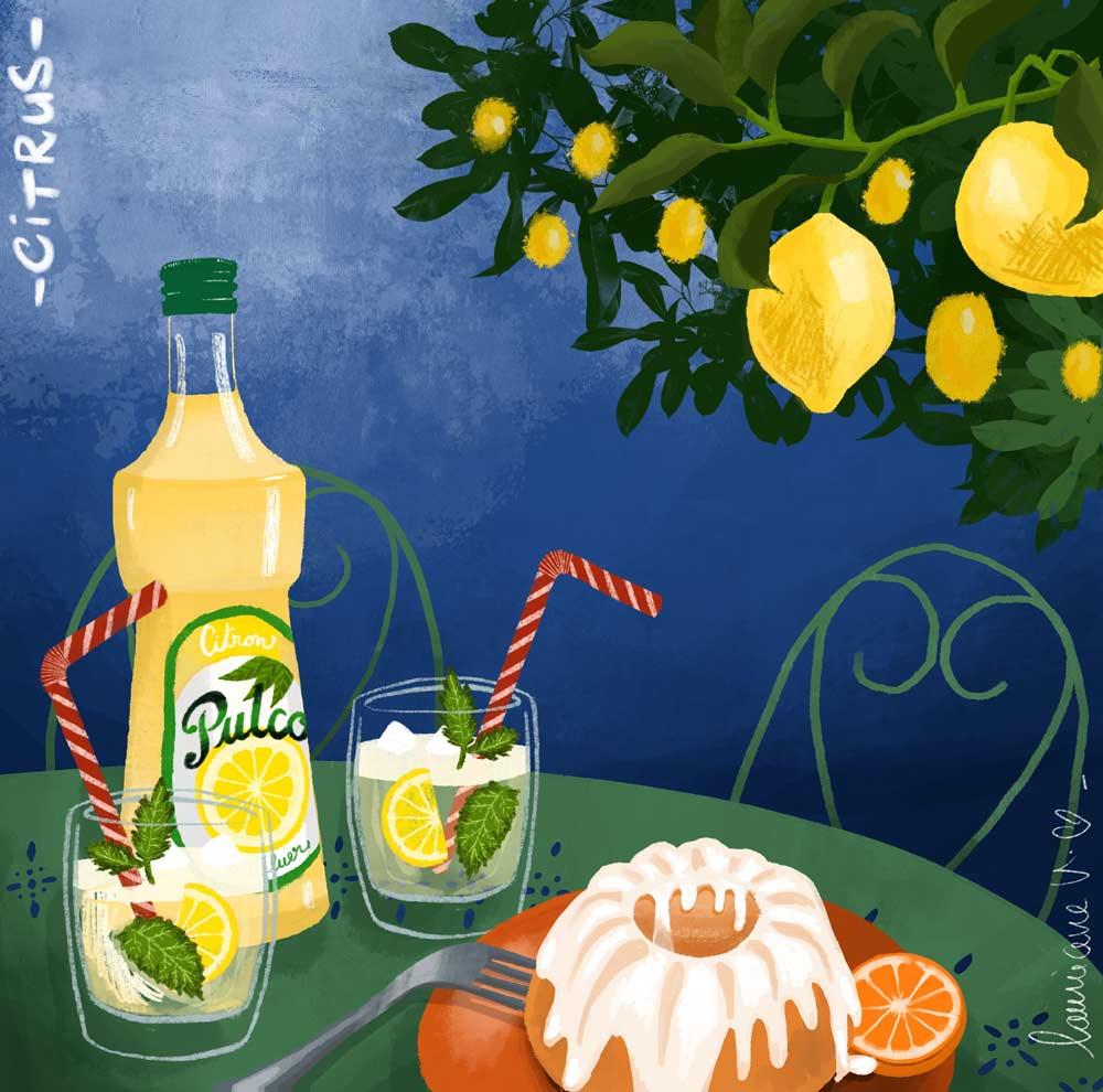 Citrus - illustration de Lauriane Vincent non libre de droits.