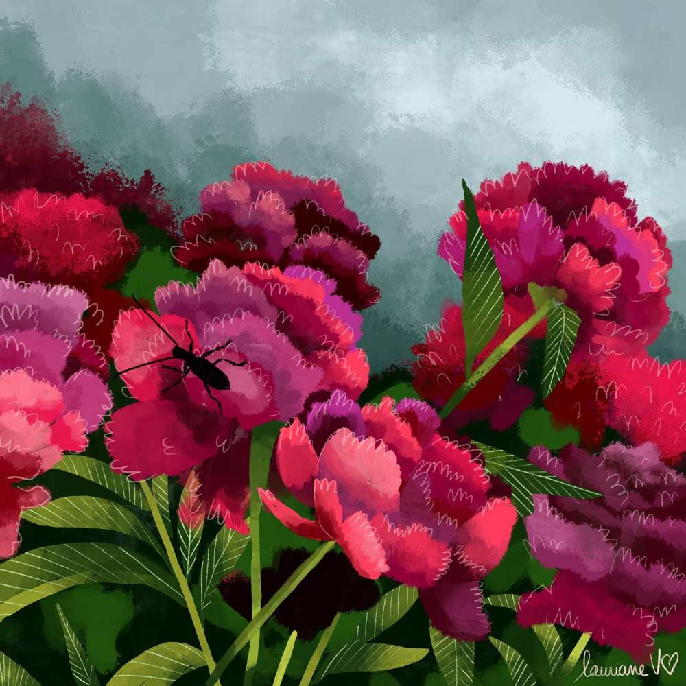 They draw and garden - pivoines - Lauriane Vincent - Illustration non libre de droit